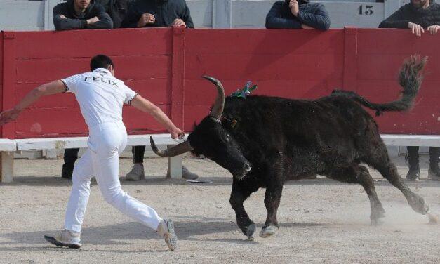 La corrida camarguesa para empezar en Arles