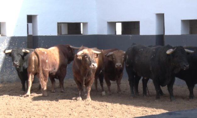 Cinco de El Cortijillo y uno de Lozano Hermanos para Albacete