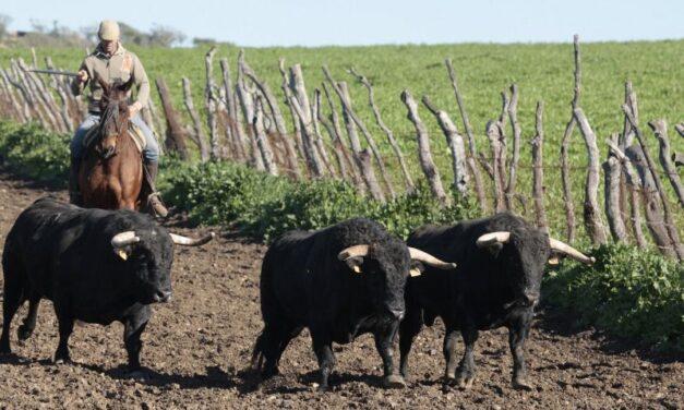 Europa defiende a la ganadería de bravo de los ataques antitaurinos