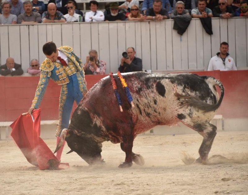 Joubert, con el toro de Torrestrella premiado con la vuelta al ruedo en el arrastre.