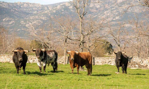 Madrid concede más de un millón de euros a los ganaderos