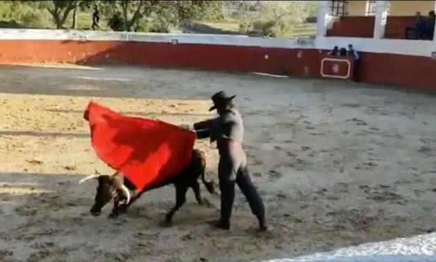 Morante también apuesta por Torrestrella en Jerez