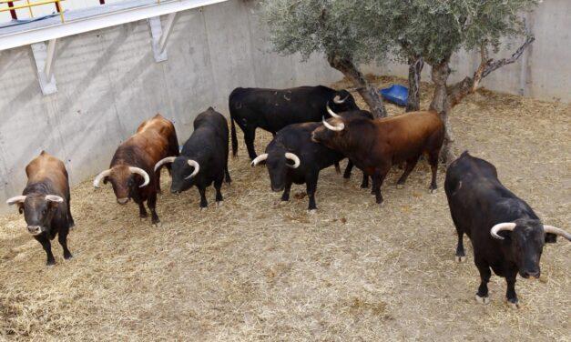 Cinco toros de José Vázquez y uno de Daniel Ruiz, para esta tarde en Illescas