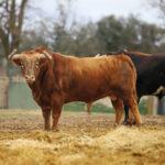 Los ganaderos de Castilla-La Mancha, desolados tras su reunión con el gobierno autonómico
