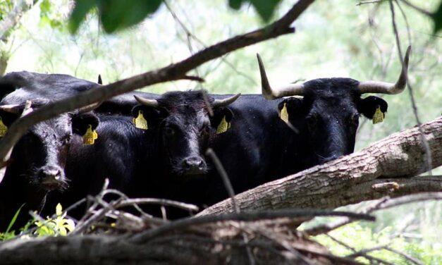 Las Cortes valencianas aprueban una propuesta para ampliar las ayudas a los ganaderos