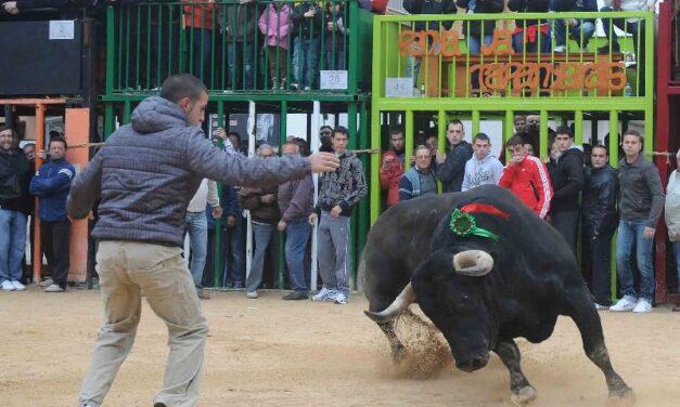 El Bou al Carrer sopesa una gran manifestación por Valencia tras seguir sin fecha para su regreso