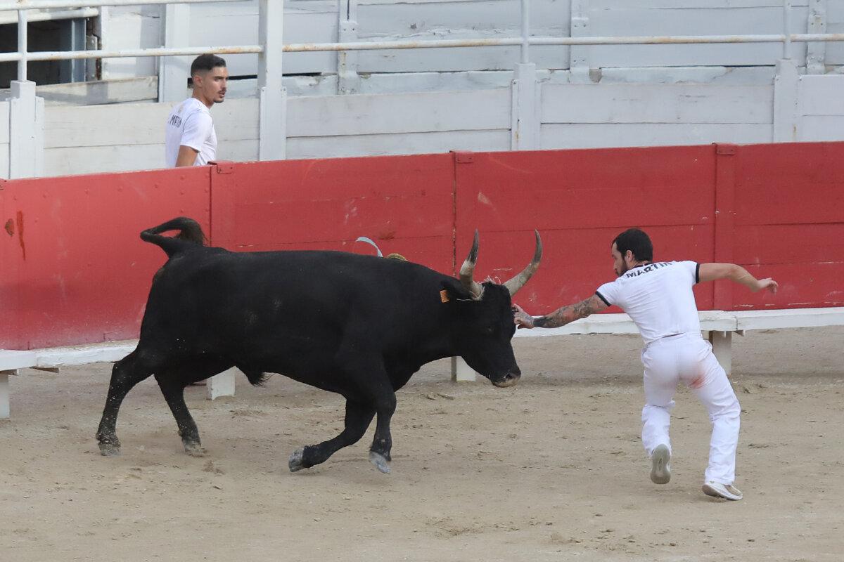 Nimes suspende su corrida camarguesa