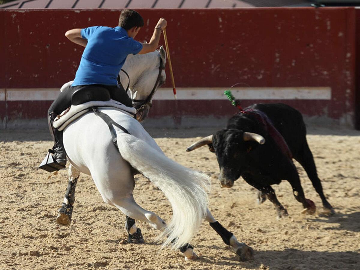 Así prepara sus caballos para Nimes Guillermo Hermoso de Mendoza