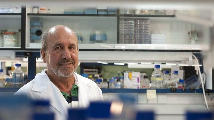 La aportación del toro a la vacuna española contra la covid-19