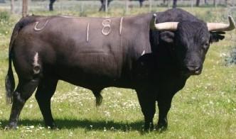 Estos son los toros para la corrida concurso de Évora