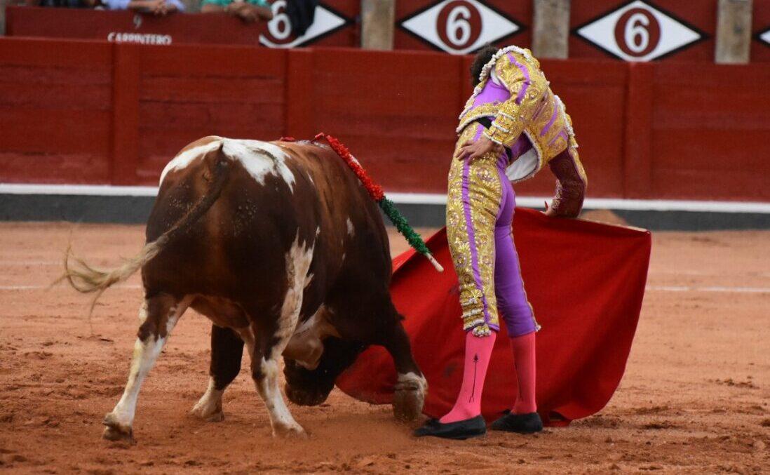 Gandillito, de Galache, Toro de Oro de la feria de Salamanca